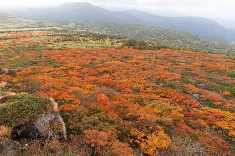 三石山 紅葉
