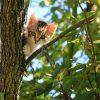 ネコの島「田代島」で猫と自然を満喫しよう!マンガアイランドでキャンプもできる
